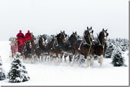 budweiser-clydesdales-in-snow1