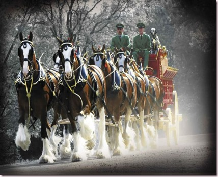 Budweiser_Clydesdales