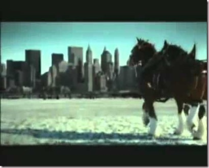 clydesdales3
