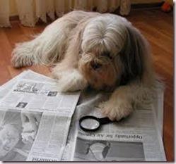 Dog, Newpaper2