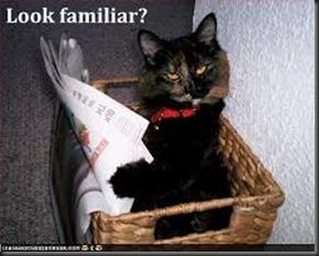 Cat, newpaper2