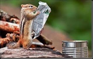 chipmonk, newspaper