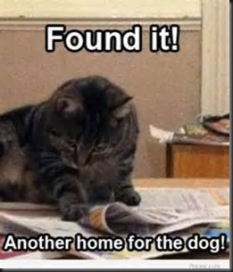 Cat, Newspaper2