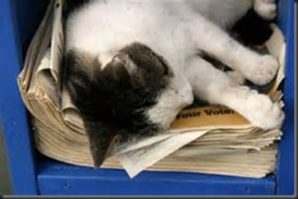 Cat, Newspapers