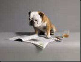 Dog, Newspaper4_thumb