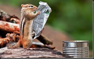 Chipmunk, Newspaper