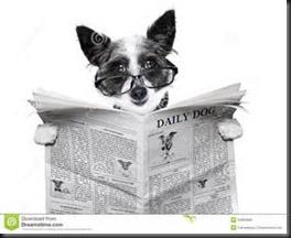 Dog, Newspaper1