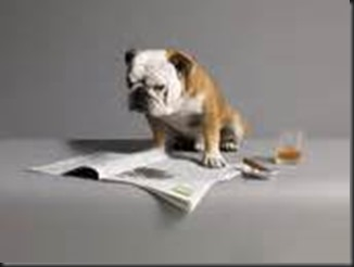 Dog, Newspaper4