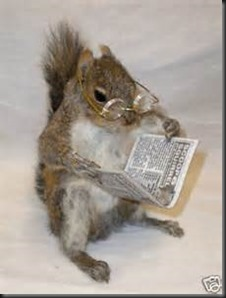 Squirrel, Newspaper