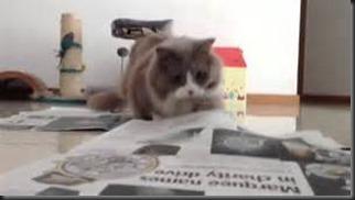 Cat, Newspaper1