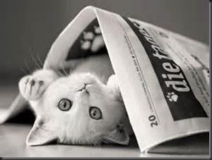 Cat, Newspaper