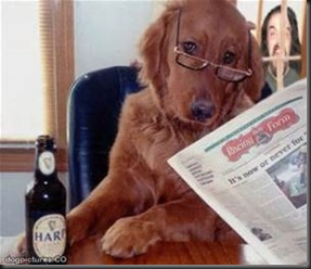 Dog, Newspaper5