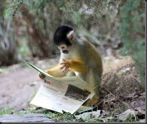 Monkey, Newspaper1