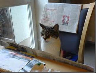 Cat, Newspaper3