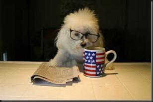 Dog, Newspaper2