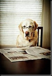 Dog, Newspaper3