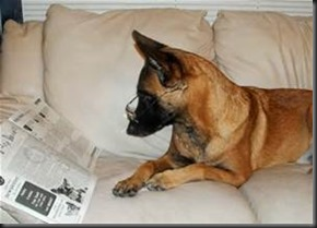 Dog, Newspaper6