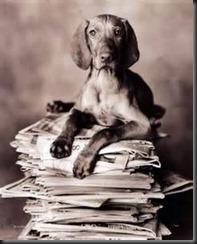 Dog, Newspaper