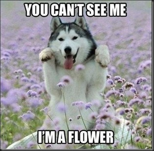 funny-animal-pictures-with-captions-008-006