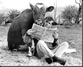 Man, Cow, Newspaper