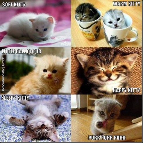 Which Kitty