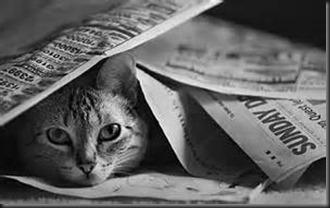 Cat Head, Newspaper