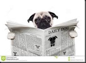 Pug, Newspaper