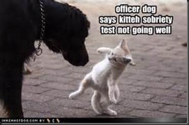 Officer Dog
