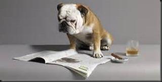 Bulldog, Newspaper