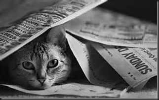 Cat Head, Newspaper