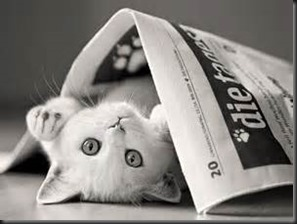 Cat, Newspaper