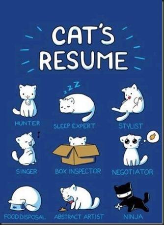 Cat's Resume