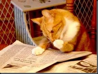 Cat, Newspaper1