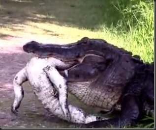 Gator Eats