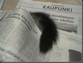 Cat Tail, Newspaper