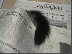 Cat Tail, Newspaper