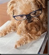 Dog, Glasses, Newspaper