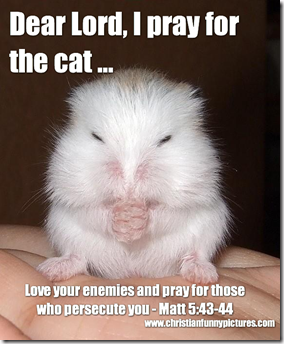 Mouse pray for the cat