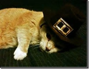 pilgrim-cat_thumb